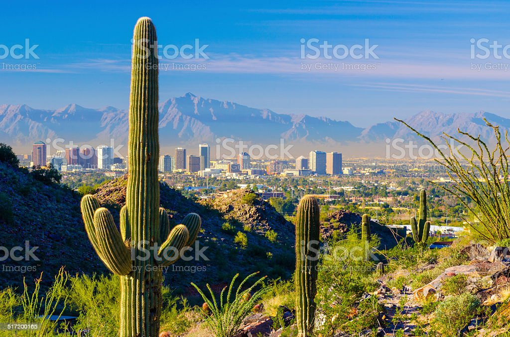 Phoenix skyline and cacti stock photo
