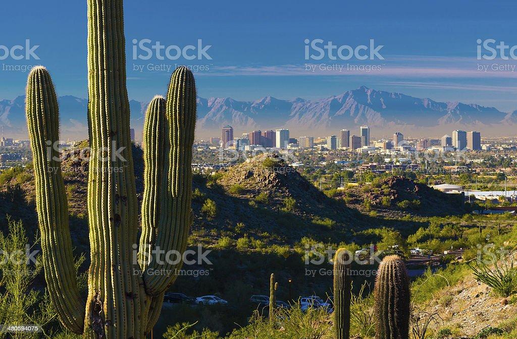 Phoenix skyline and cactuses stock photo