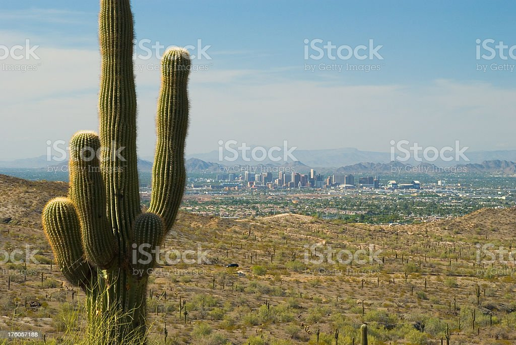 Phoenix skyline, desert, and cactus royalty-free stock photo