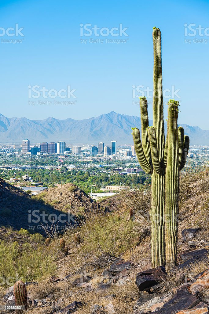 Phoenix skyline framed by saguaro cactus and mountainous desert stock photo