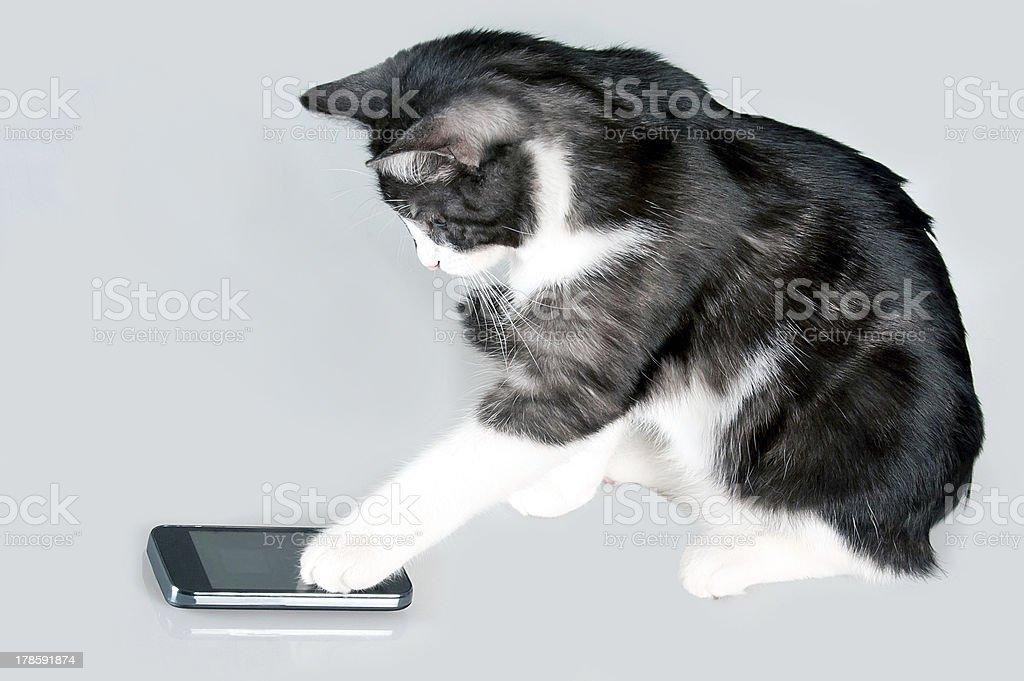 Phoning cat stock photo