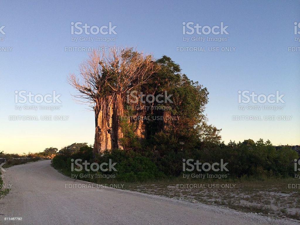 Phosphate pinnacle in the central plateau of the Republic of Nauru stock photo