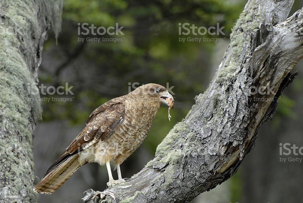 Photo a bird with beak full of worms and grubs stock photo