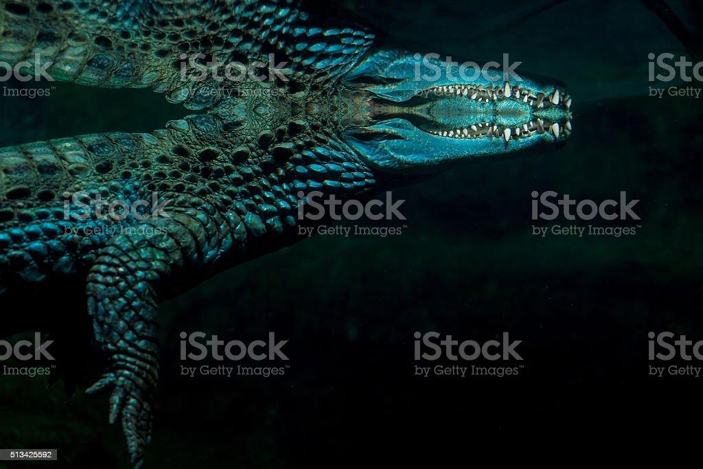 Photo beautiful crocodile under the water stock photo