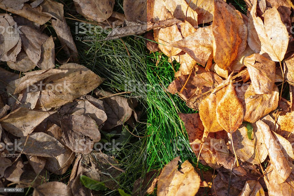 Photo before and after the image editing process. Autumn leaves stock photo