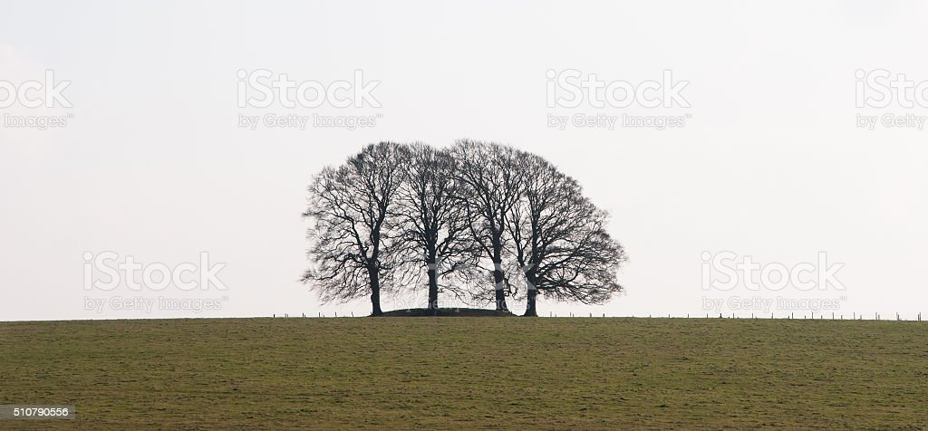 Photo Copse 4 bare trees winter ridge grey sky stock photo