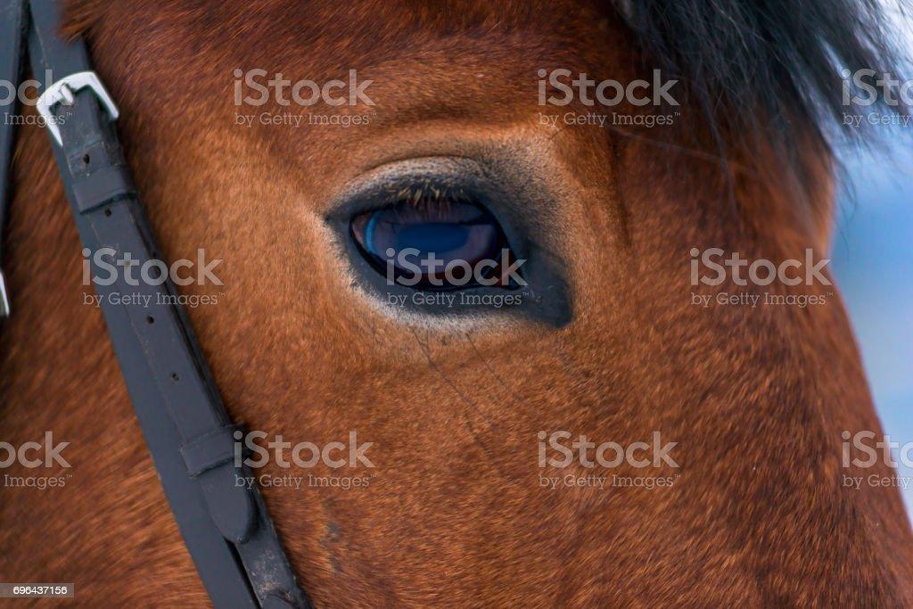 Photo eye macro brown thoroughbred horse stock photo