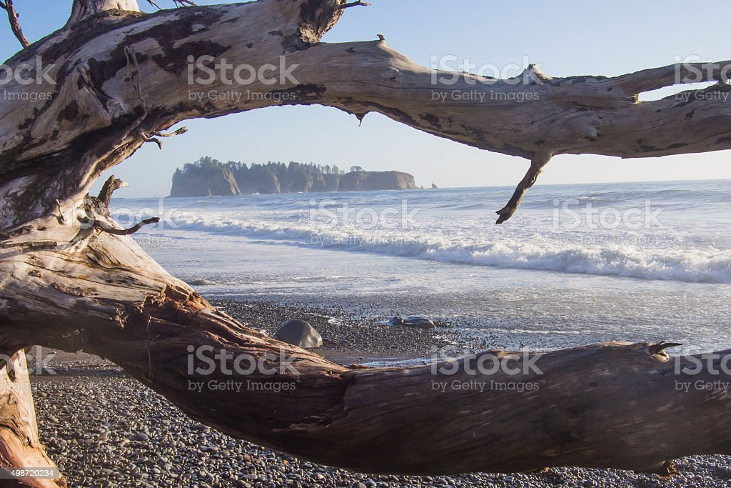 Photo Looking Through Driftwood out at Island on Rialto Beach stock photo