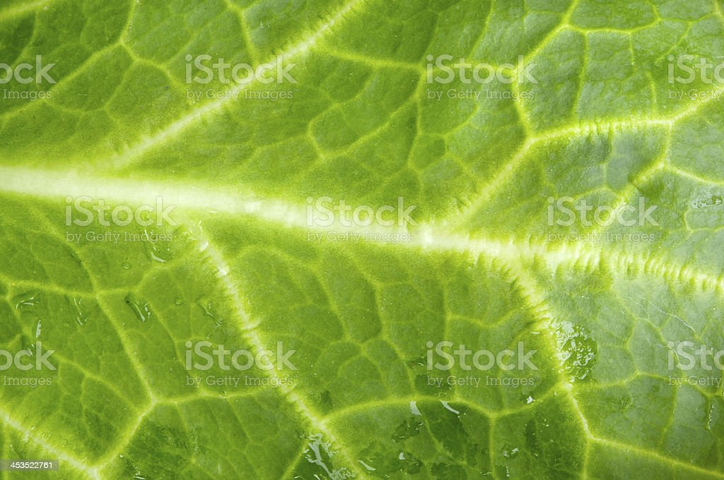 photo macro of leaf green lettuce and fresh royalty-free stock photo