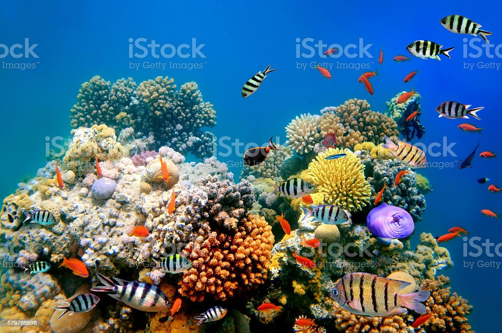 Photo of a coral colony stock photo