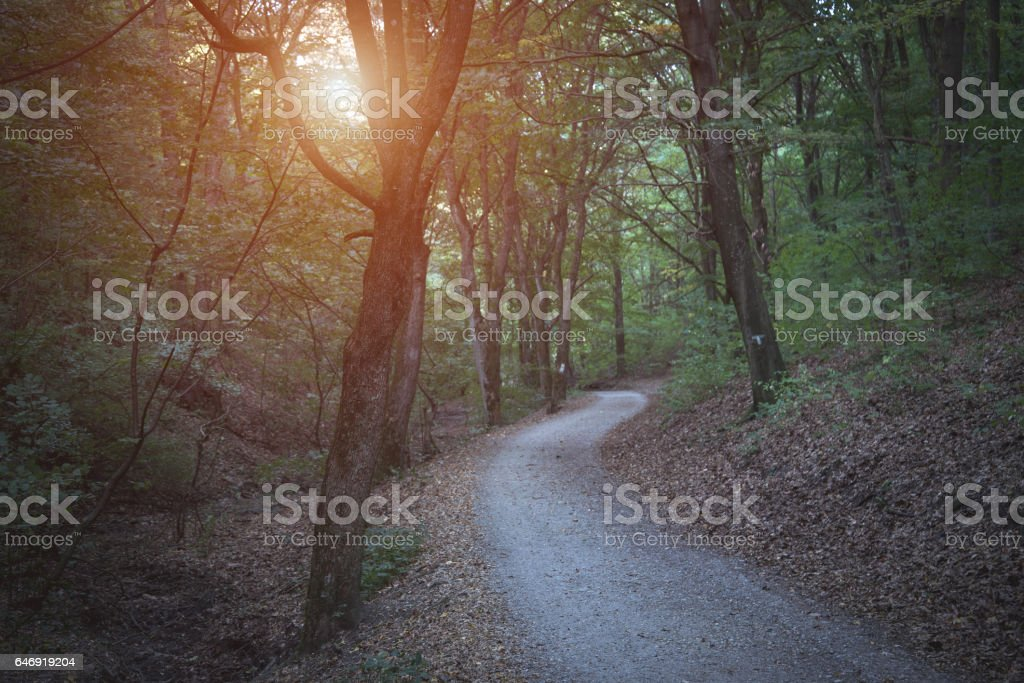 Photo of a dark forest stock photo