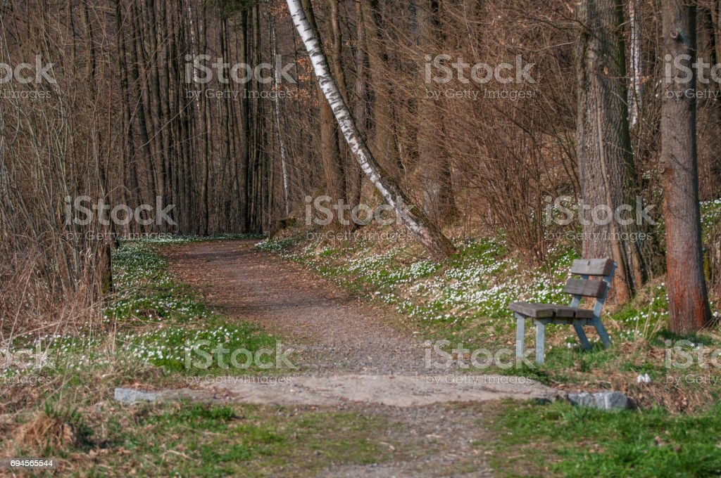 Photo of a dirt road in the middle of a spring pine forest stock photo