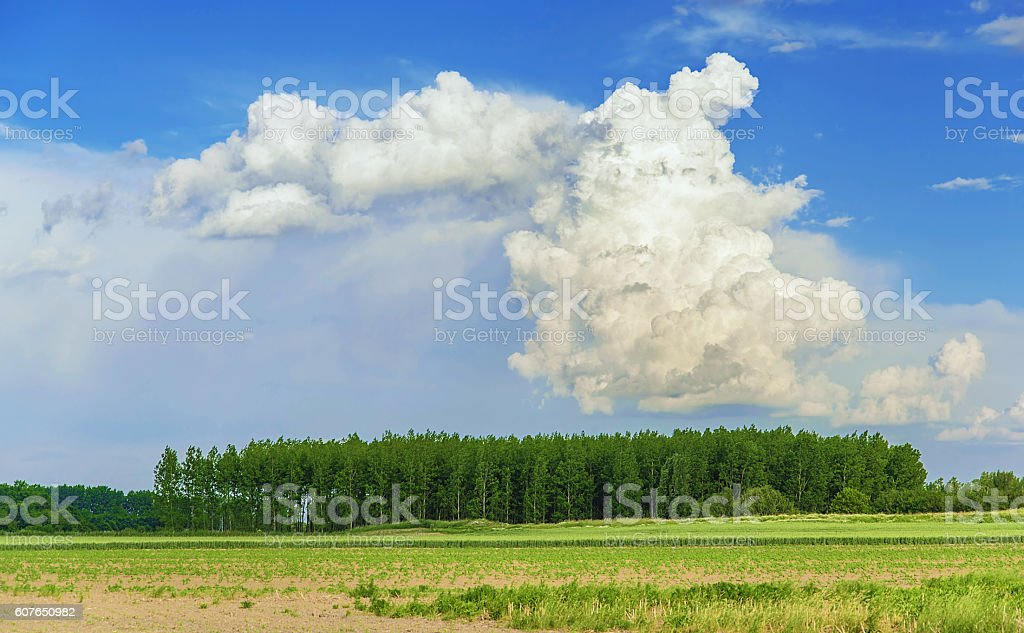 Photo of a field a cloudy day stock photo