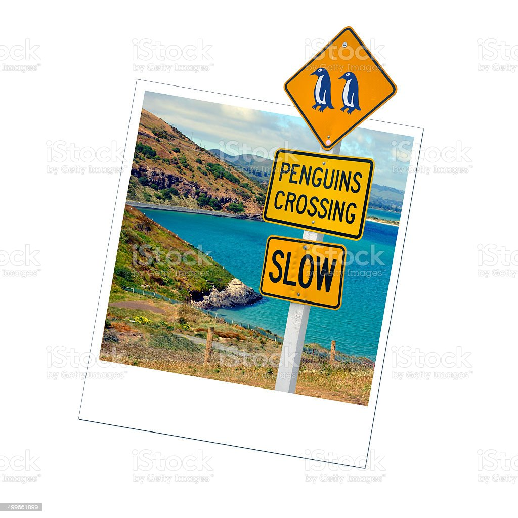 Photo of a penguins sign, New Zealand stock photo