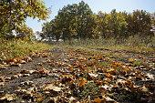 photo of autumn trees