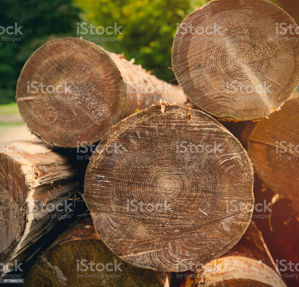 photo of beautiful bunch of felled and cut trees on the trees background stock photo