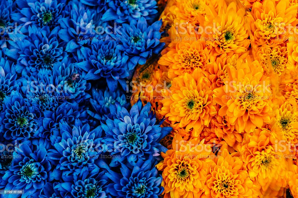 Photo of bouquet of flowers on Flower Market, Amsterdam, Netherlands stock photo