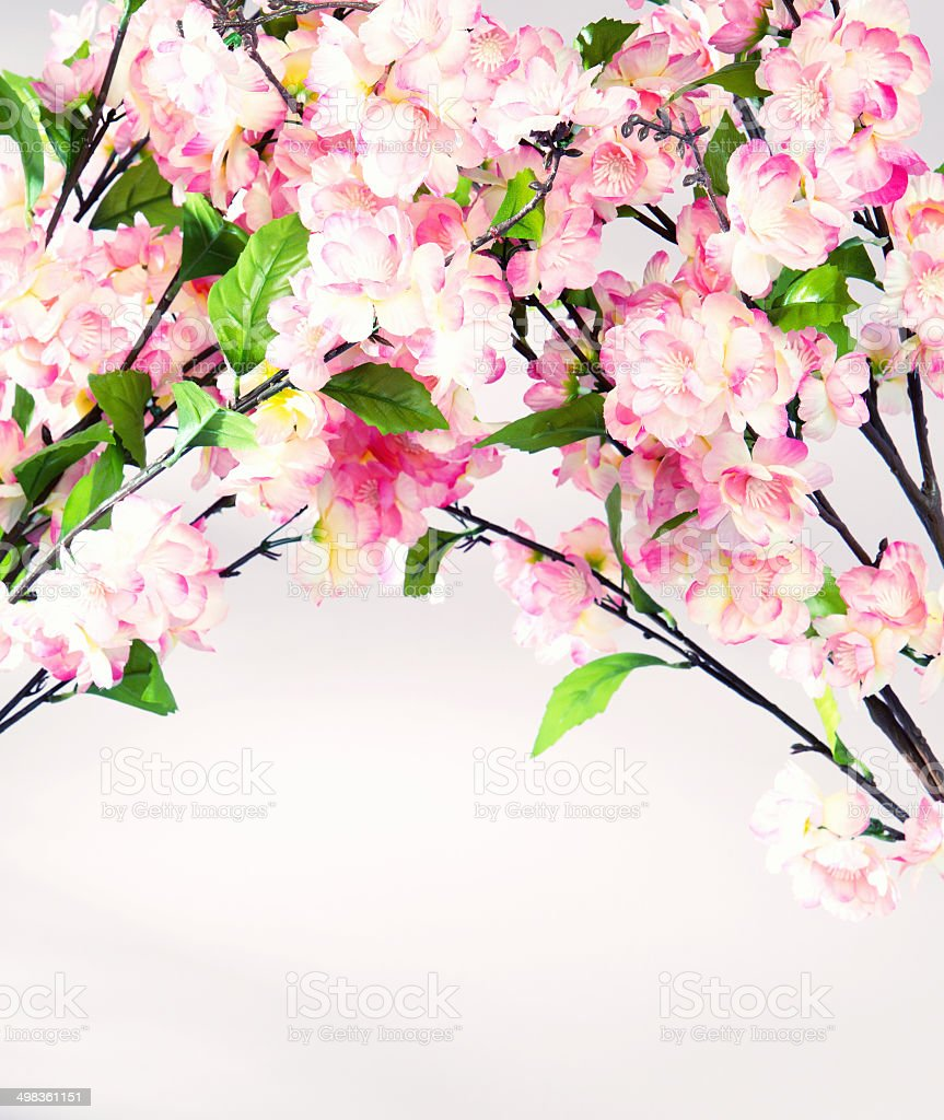 Photo of colorful sweet-smelling flowers royalty-free stock photo