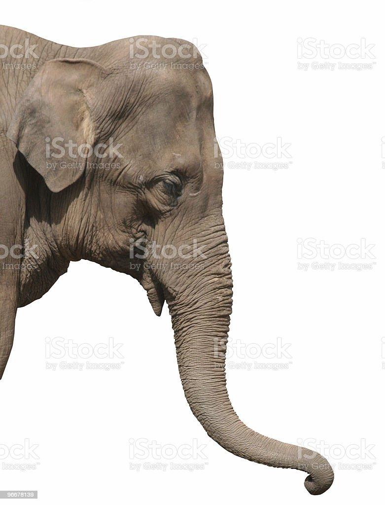 Photo of elephant head isolated on white stock photo
