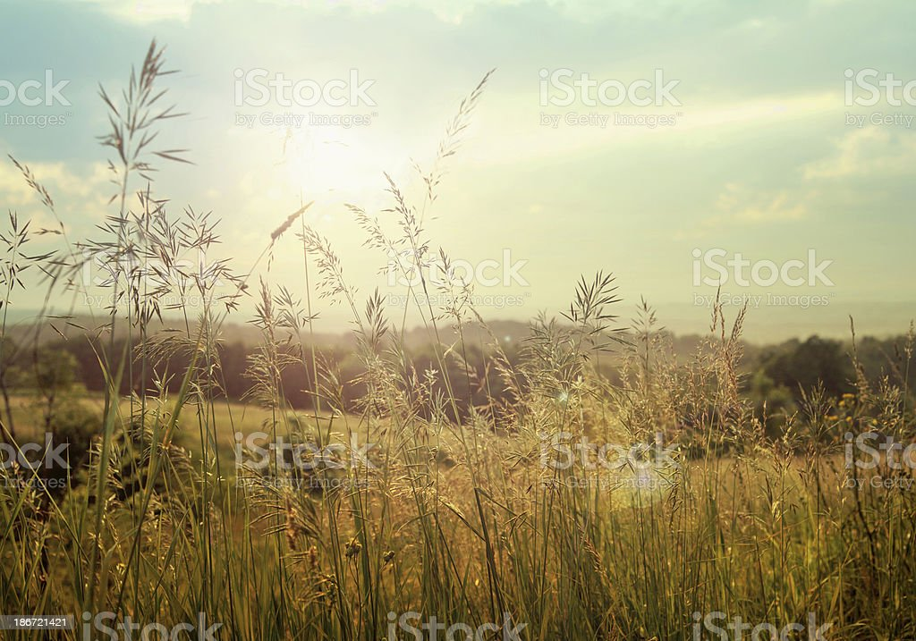 Photo of fields with corn stock photo