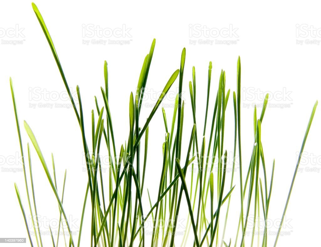 Photo of Grass isolated on White stock photo