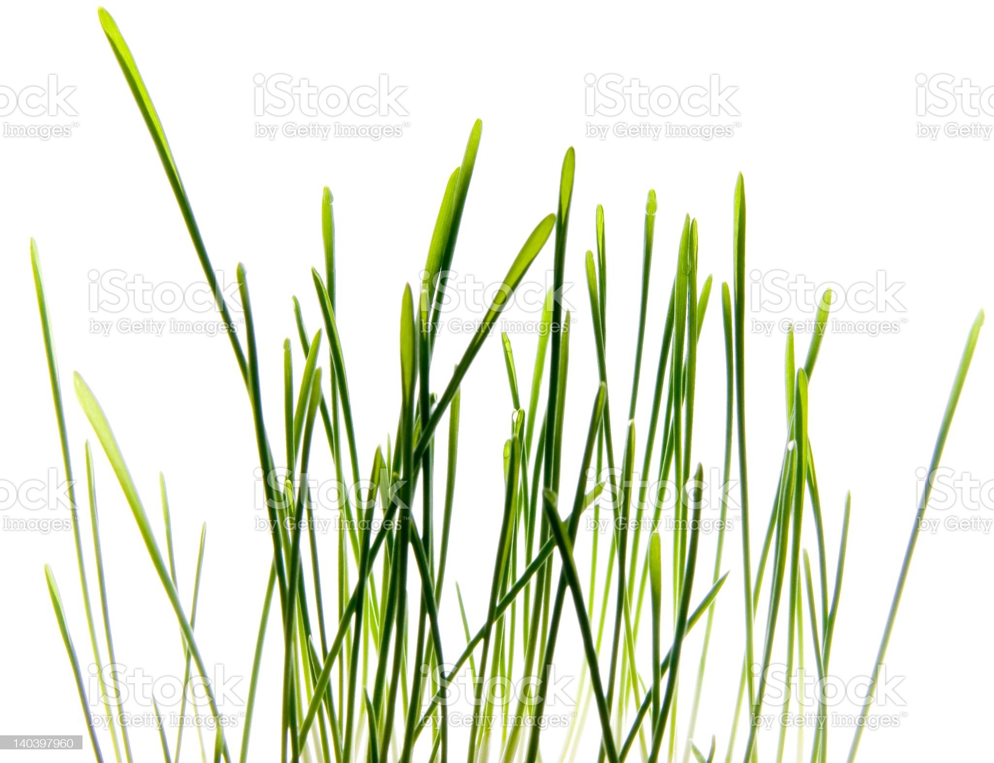Photo of Grass isolated on White royalty-free stock photo