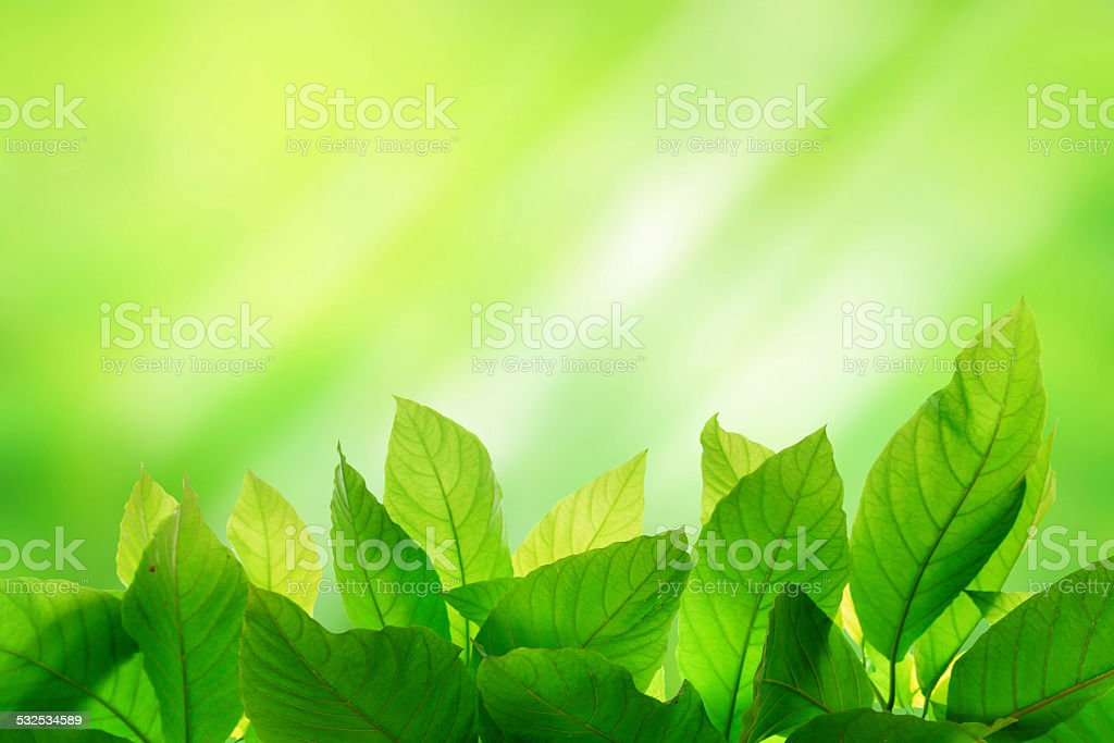 Photo of Green leaf on bright and light green color stock photo