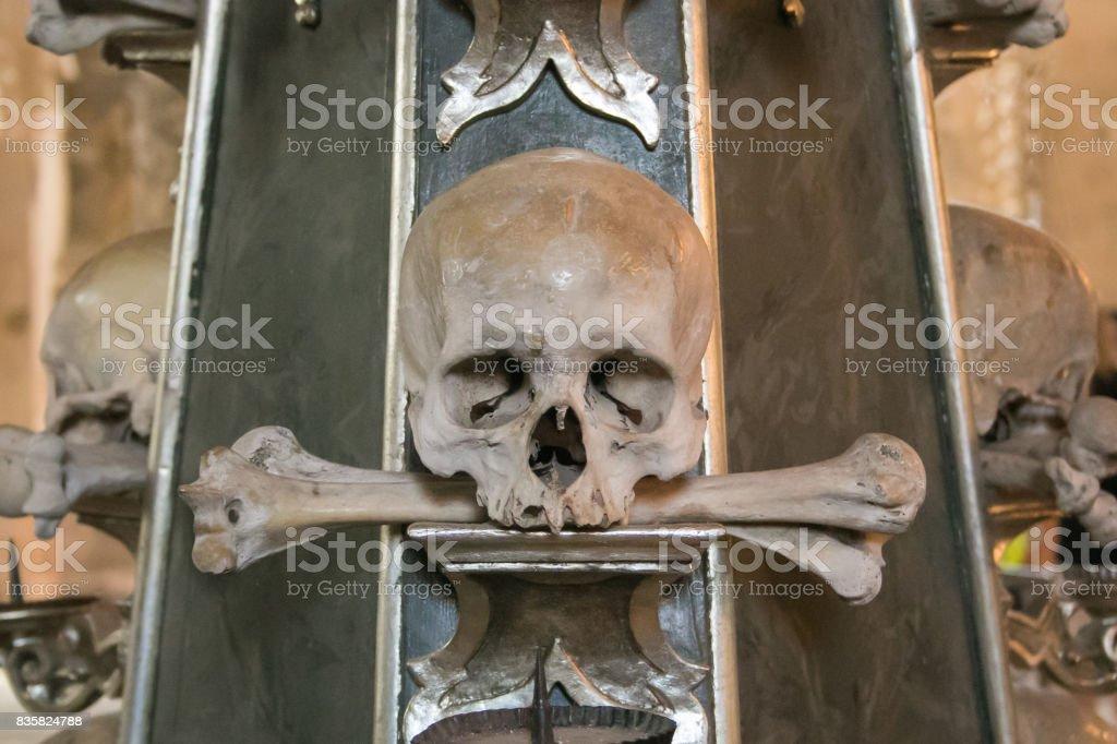 Photo of human skull and bone stock photo