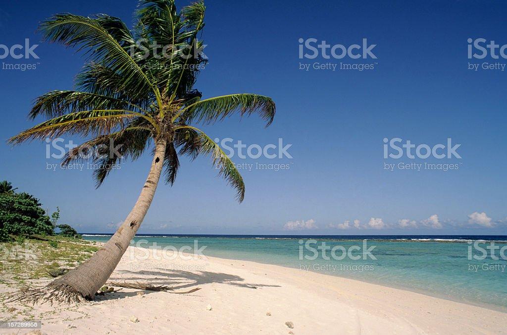 Photo of lone palm tree and white sand beach stock photo