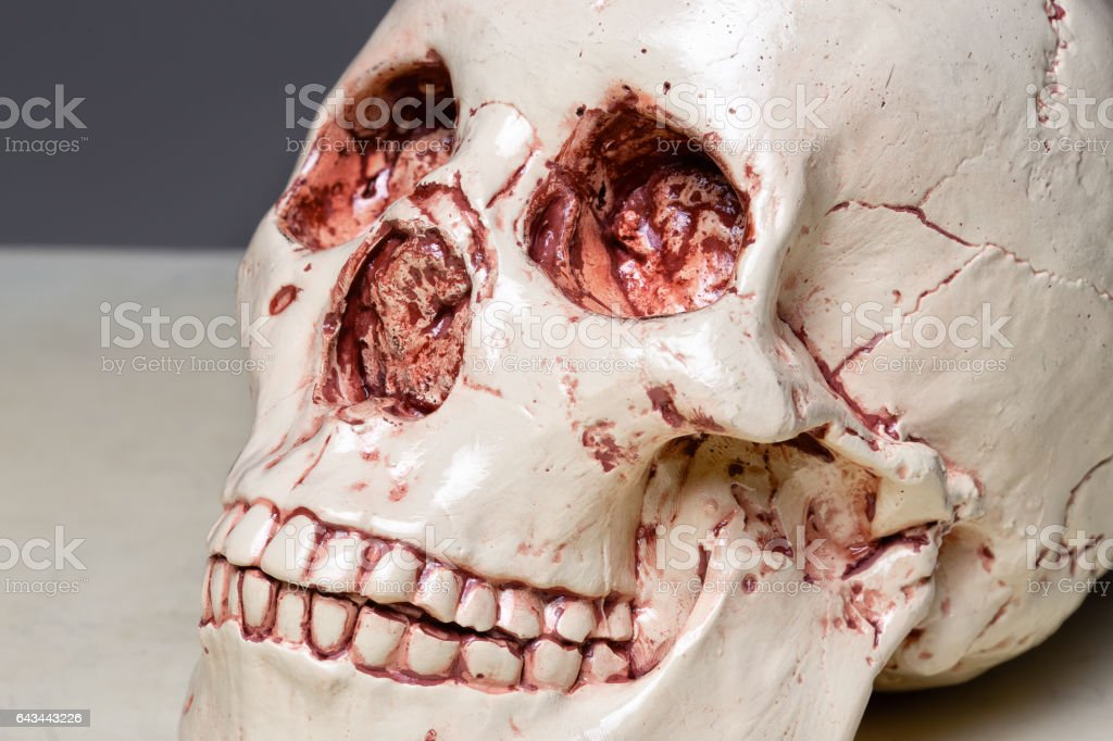 Photo of model human's scull stock photo