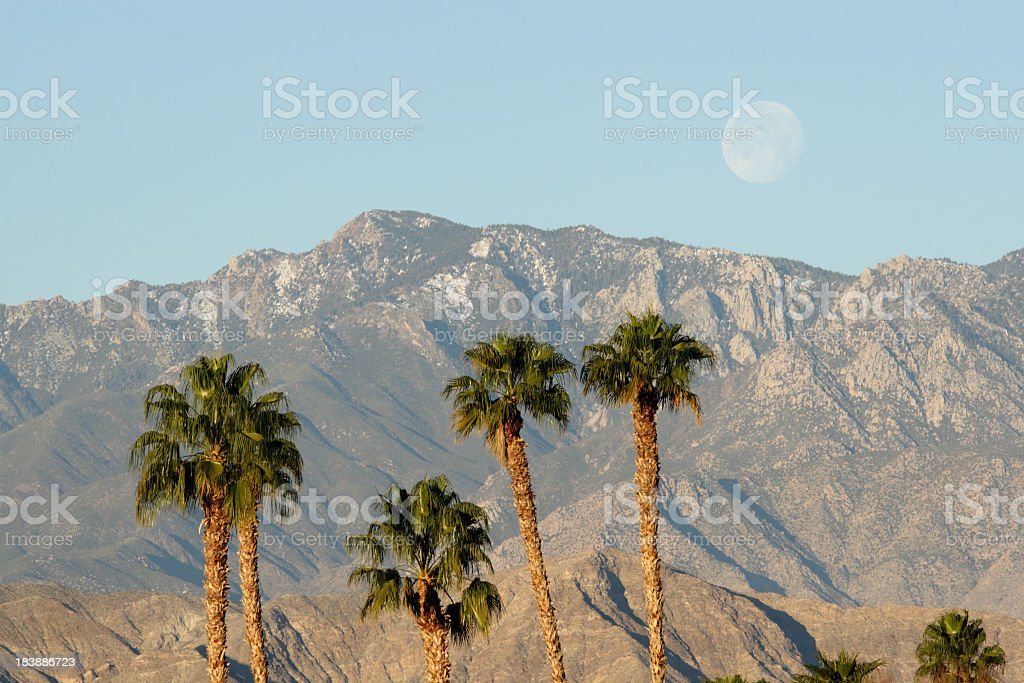 Photo of palm trees against backdrop of desert mountains stock photo