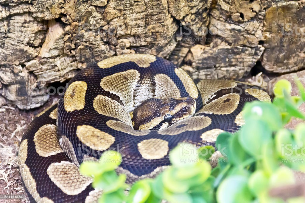 Photo of python snake in green stock photo