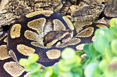 Photo of python snake in green