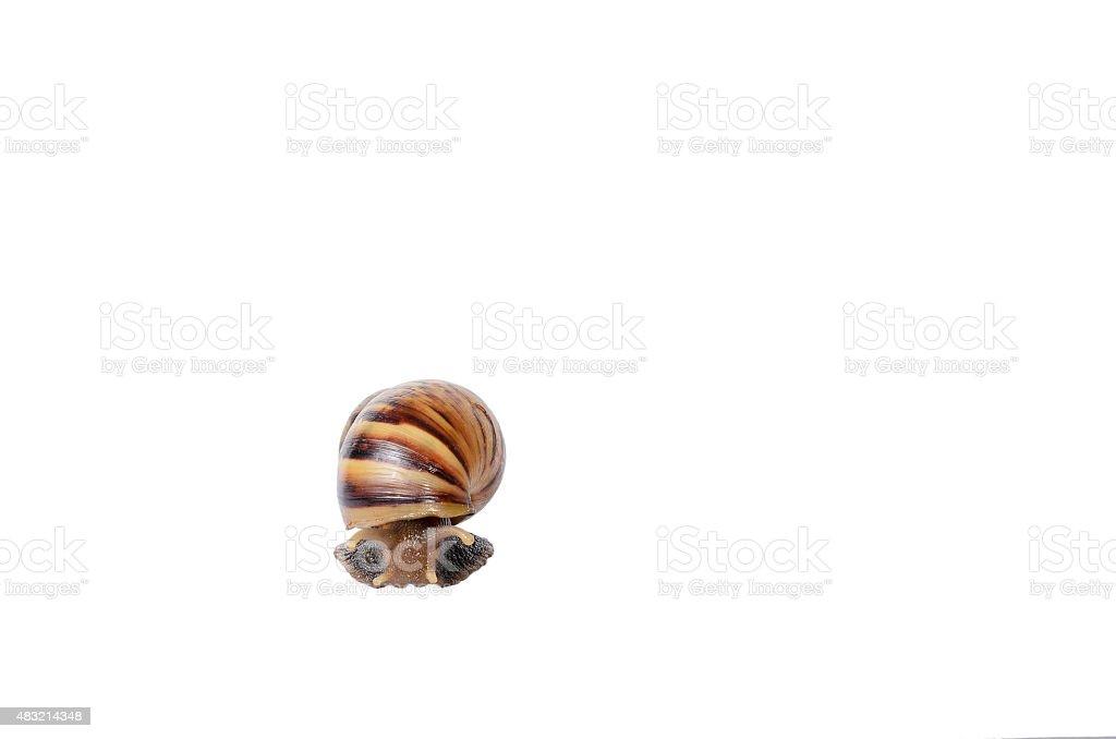 Photo of snail on white background stock photo