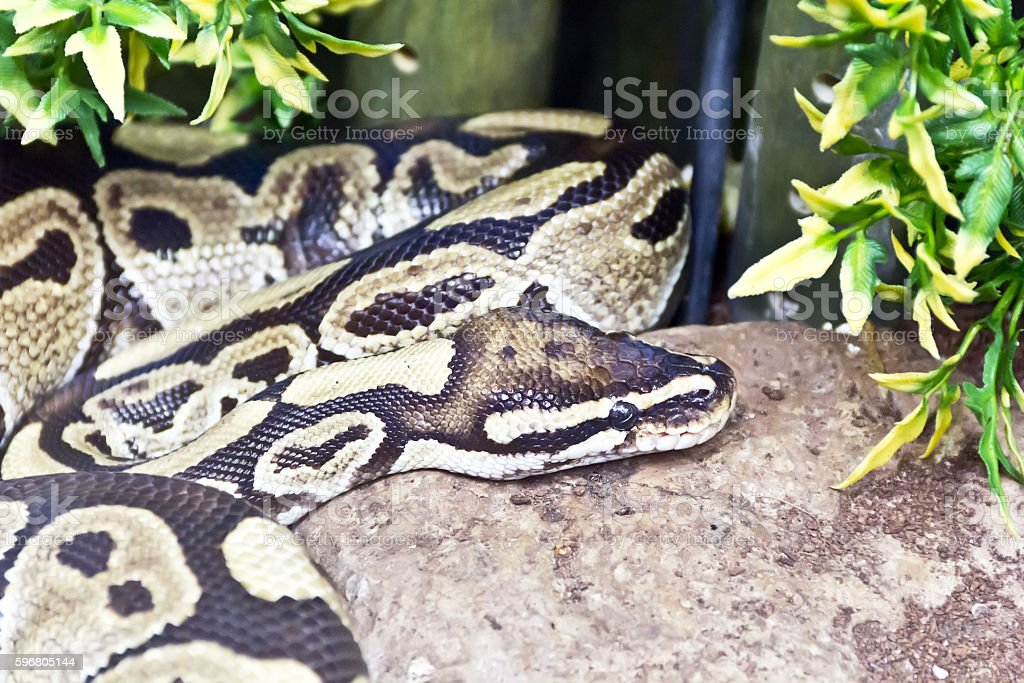 Photo of snake close up stock photo