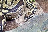 Photo of snake close up