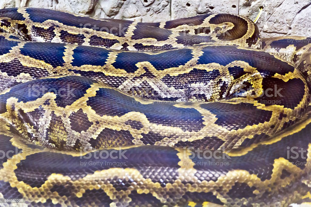 Photo of snake skin close up in zoo stock photo