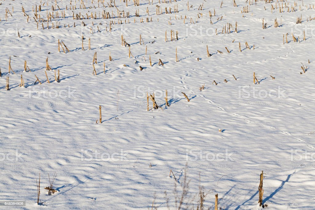 Photo of snow, close-up stock photo