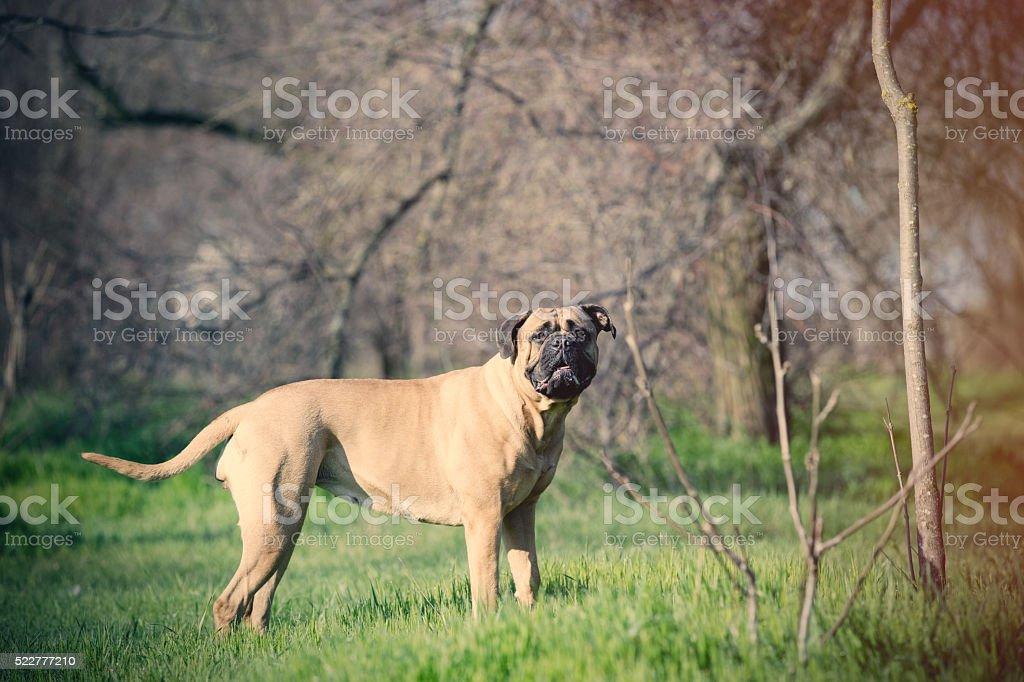photo of the dog stock photo