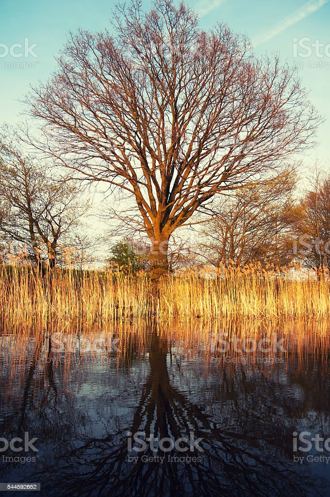 Photo of tree reflected in a misty lake stock photo