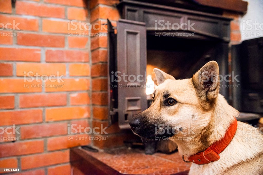 Photo of Yellow dog resting  in front of fireplace stock photo