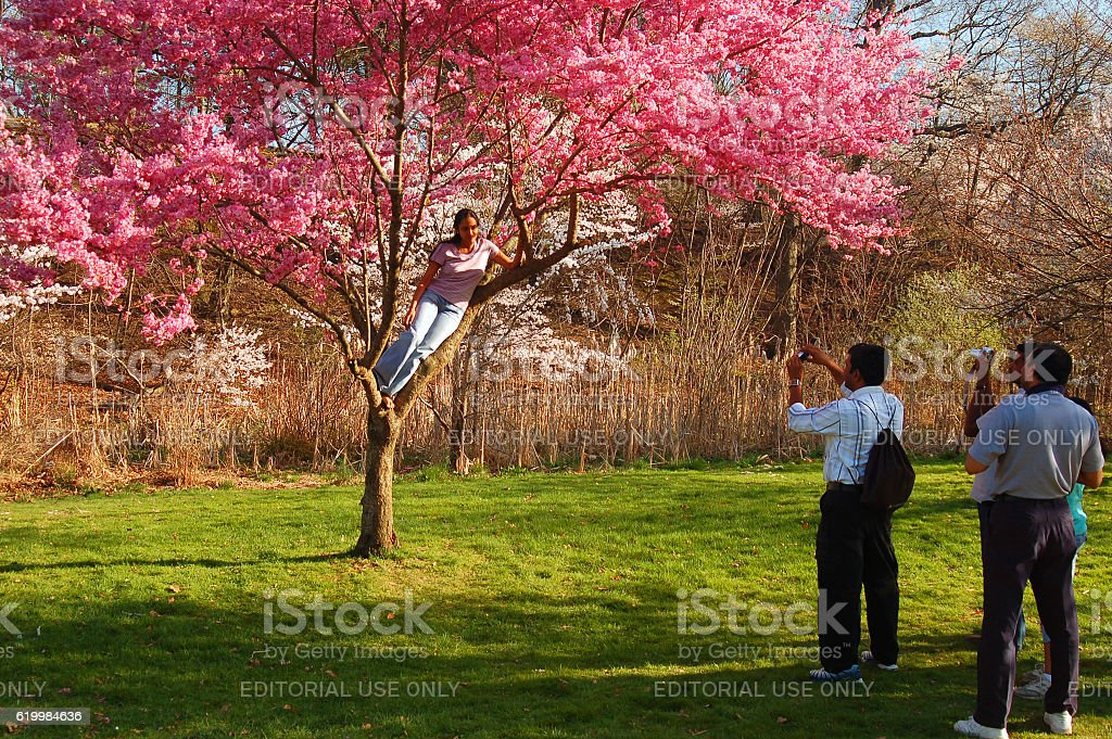 Photo Opportunities with Cherry Blossoms, Branch Brook Park, Newark stock photo