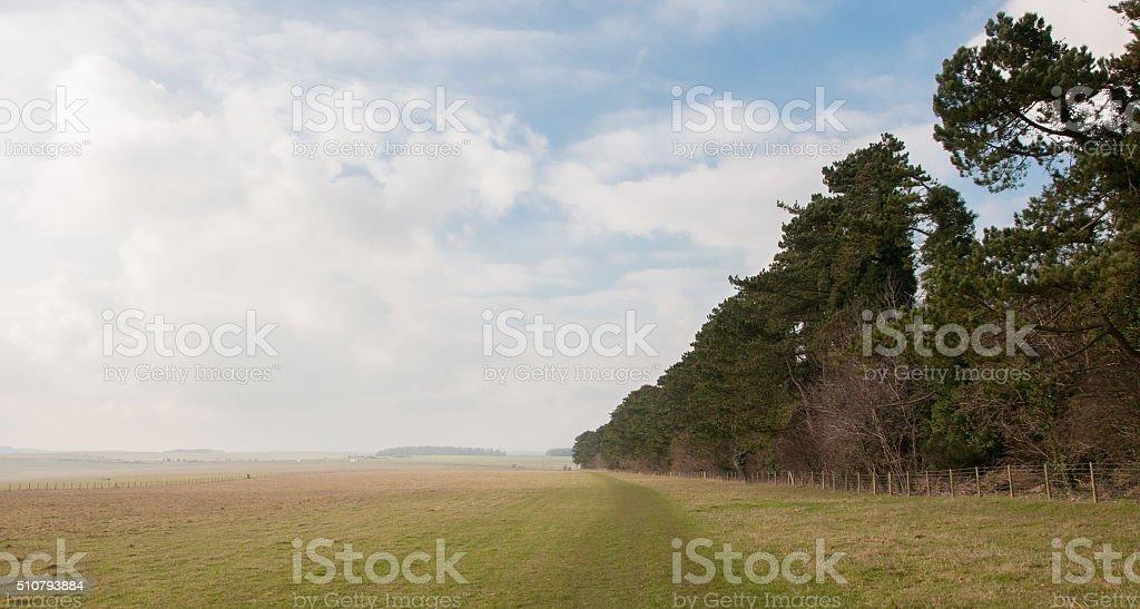 Photo pine trees edge of flat open plain land / prairie stock photo