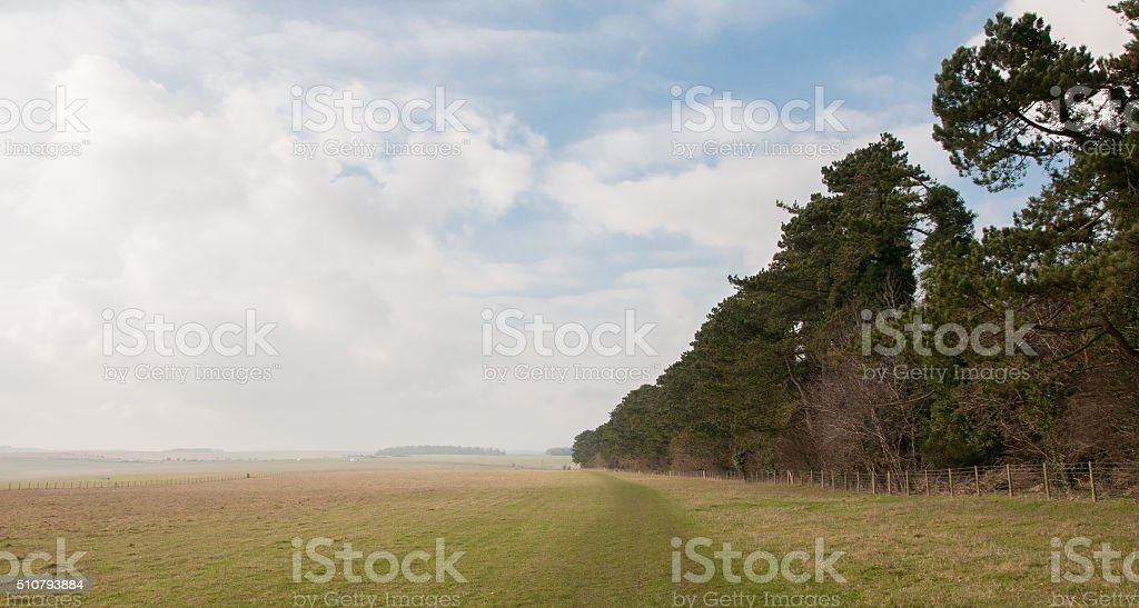 Photo pine trees edge of flat open plain land / prairie stock photo