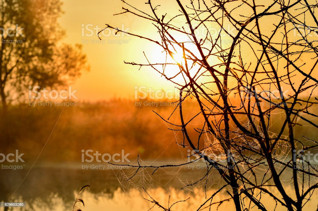 Photo with a summer sunrise and a tree stock photo