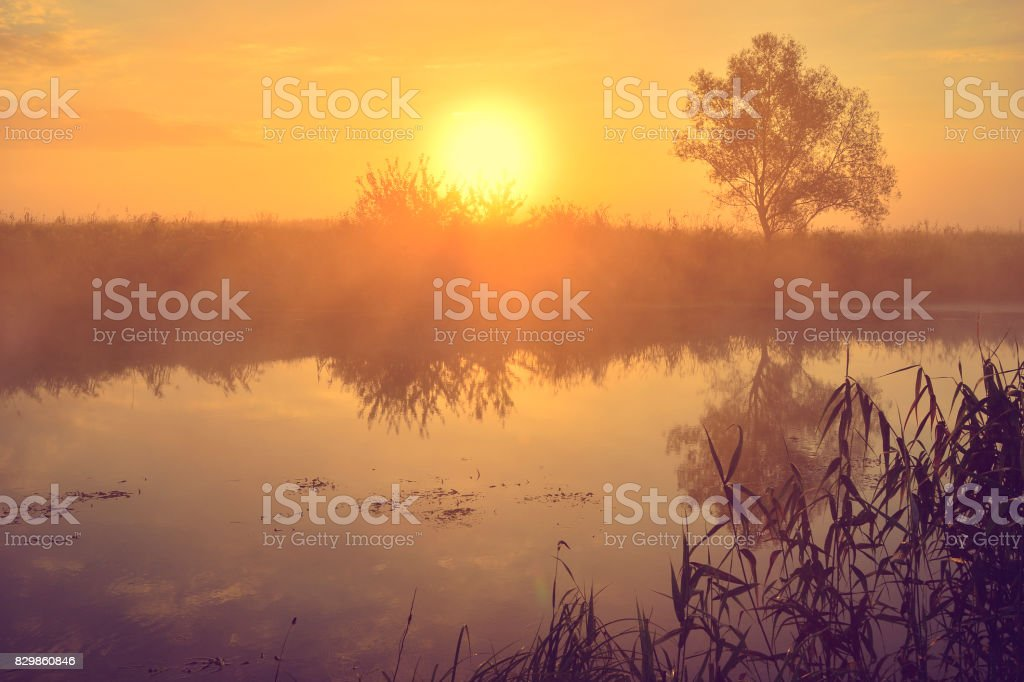 Photo with a summer sunrise by river and tree stock photo