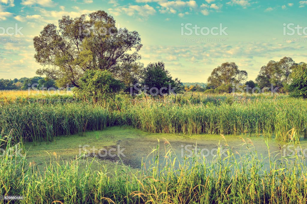 Photo with overgrown lake in summer stock photo