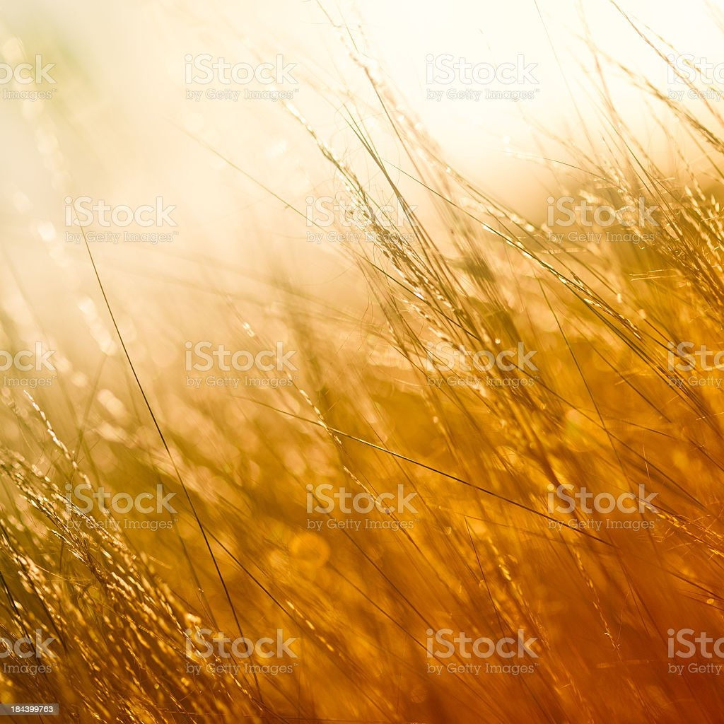 Photograph of a field in golden color stock photo