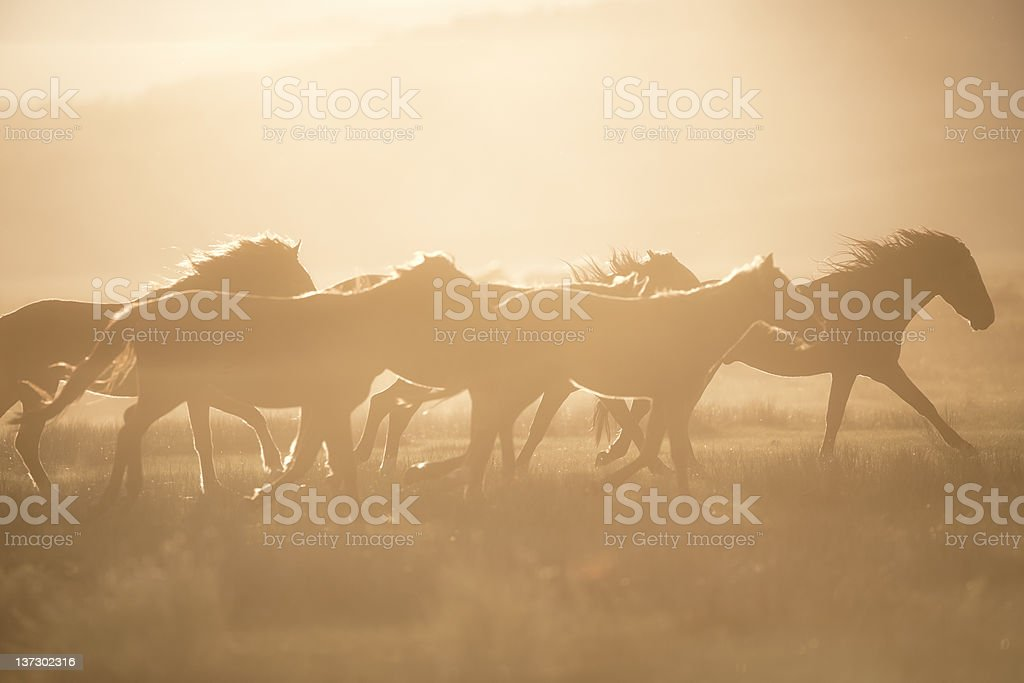 A photograph of a group of wild horses stock photo