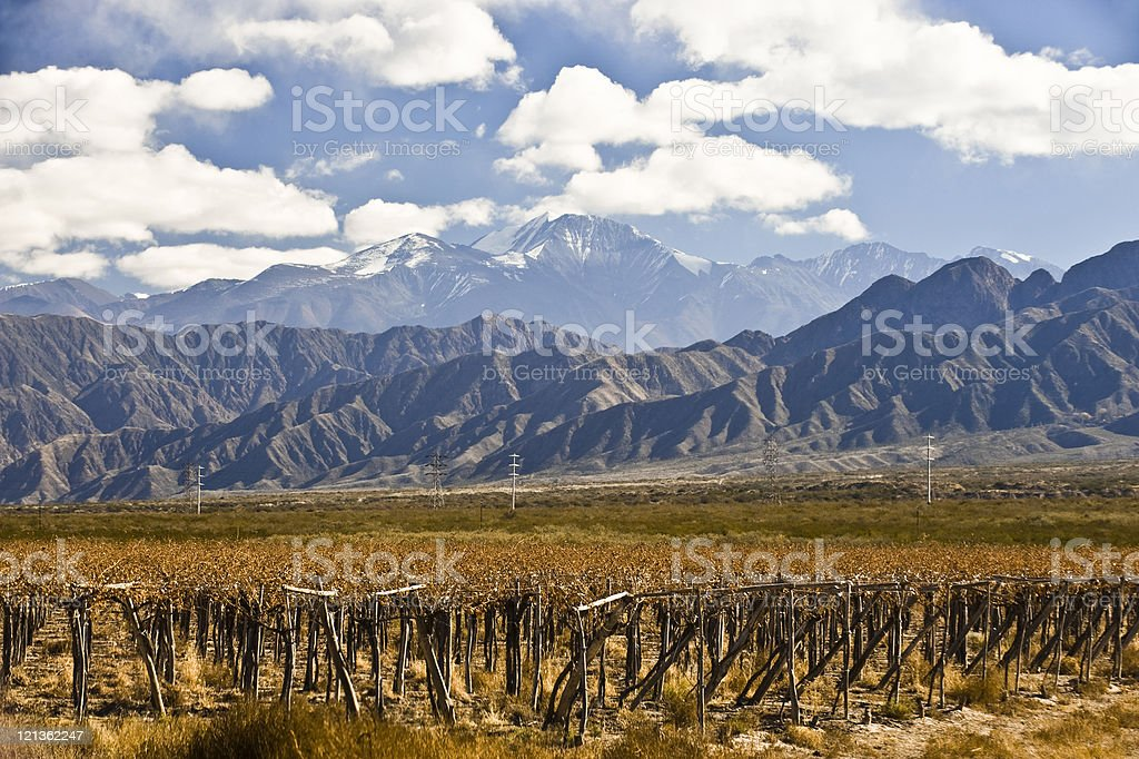 Photograph of a vineyard near Volcano Aconcagua stock photo